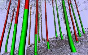 Scan dreves