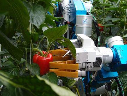 robot pobira papriko