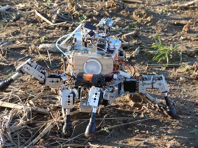 Robot sejalnica