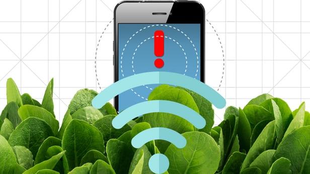 spinach-nanobioinic