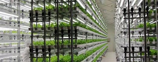 Futuristične kmetije, ki bodo hranile svet