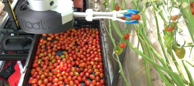 Nov robot za pobiranje paradižnika