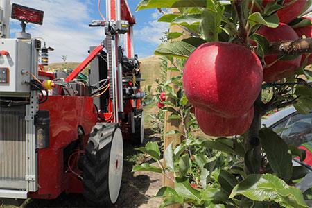 Prvi komercialno dostopen robot za pobiranje jabolk