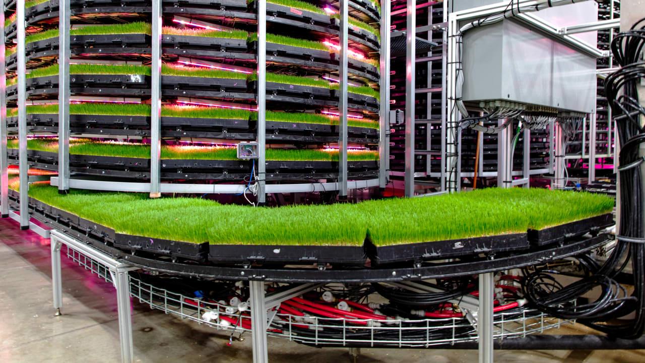 Vertikalno poljedelstvo