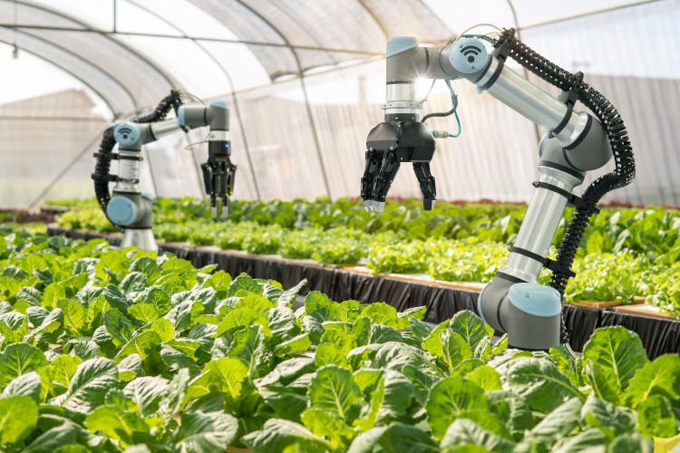 Primer in smer razvoja robotizacije v kmetijstvu