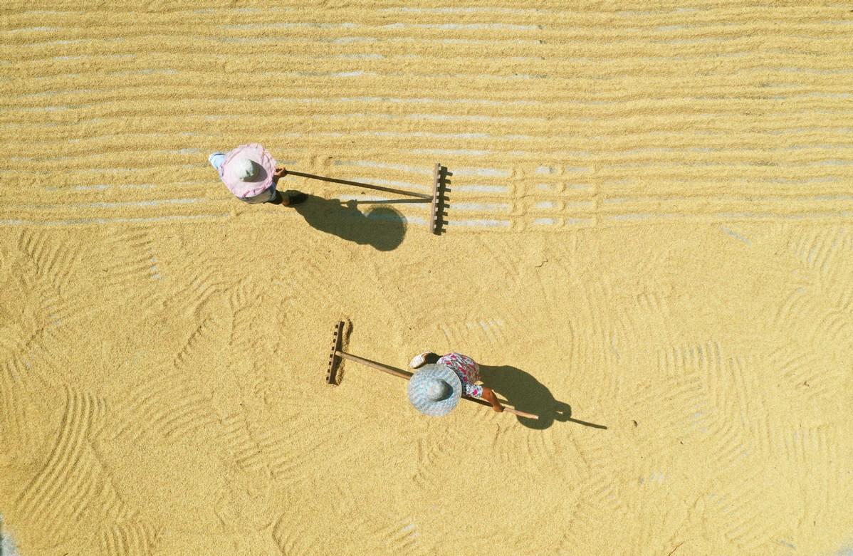 Vertikalna pridelava riža